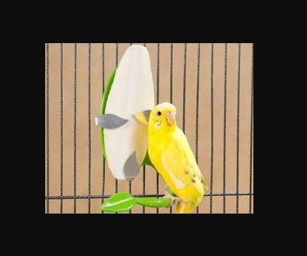 Asinan Untuk Lovebird