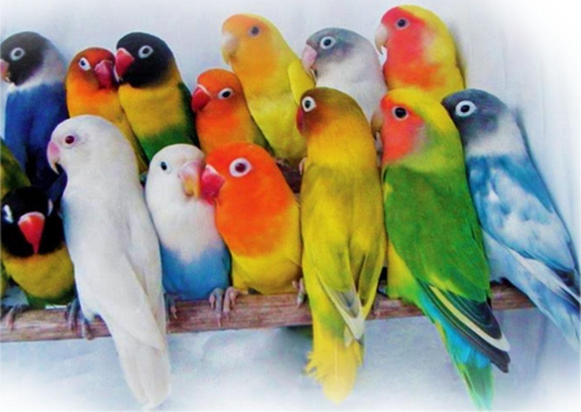 Nama yang bagus untuk Lovebird Jantan Ataupun Betina