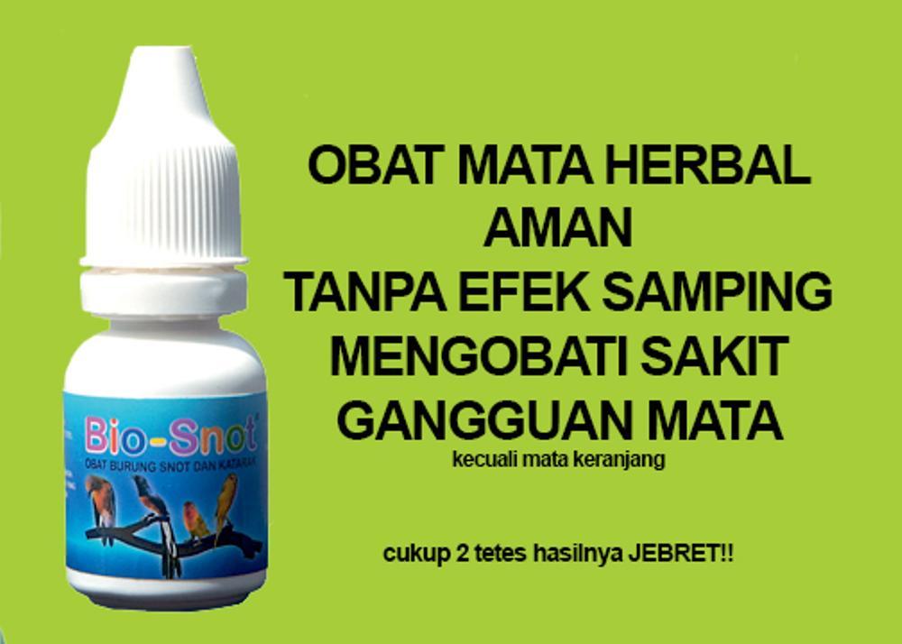 Obat Snot Herbal Ampuh Untuk Lovebird dari Ebof Jaya