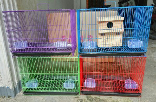 Kandang Ternak Burung Love Bird yang Ideal - Tips Cara ...