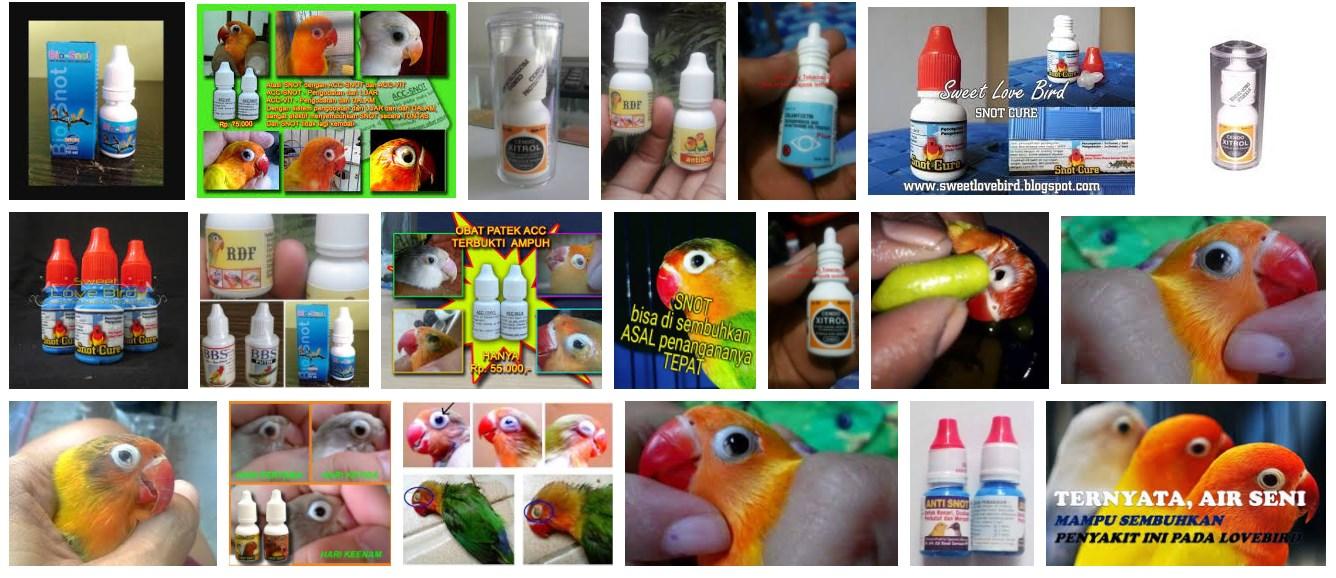 Obat Snot untuk burung lovebird yang ampuh